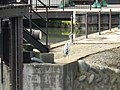 2 Chome Nakajima, Toyama-shi, Toyama-ken 930-0801, Japan - panoramio (6).jpg
