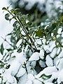317 winter-9 (11742149253).jpg