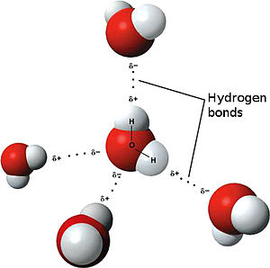 Model of hydogen bonds in water in English.