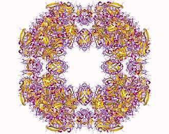 Peptidase Do - Protease do homo24mer, E.Coli