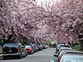 46thStreetTrees.jpg