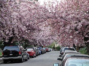 Belmont Village, Philadelphia - Image: 46th Street Trees