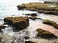 5 מפרץ הצדפים , שמורת חוף דור-הבונים.jpg