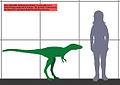 5 years Tarbosaurus size 01.jpg
