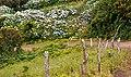 Açores 2010-07-19 (5055072042).jpg