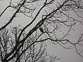 Ağaçtaki kuşlar.JPG