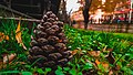 A Cone Landscape.jpg