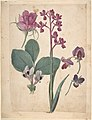 A Sheet of Studies of Flowers- A Rose, a Heartsease, a Sweet Pea, a Garden Pea, and a Lax-flowered Orchid MET DP807374.jpg