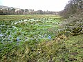 A distinctly wet field - geograph.org.uk - 680559.jpg