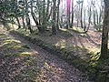 A leat in woodland - geograph.org.uk - 117735.jpg