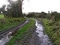 A muddier lane, Rarogan - geograph.org.uk - 1046867.jpg