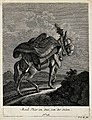 A muzzled, harnessed and loaded mule walking up a rocky path Wellcome V0021154EL.jpg