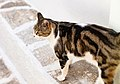 A nice cat (50381781698).jpg