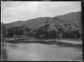 A punt, transporting a horse, being winched across the Waipa River, in 1917. ATLIB 284371.png