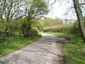 A quiet country lane between Nyewood and East Harting - geograph.org.uk - 788246.jpg