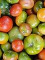 A scene of Tomatoes.JPG