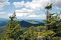 Abies balsamea Whiteface Mountain NY.jpg