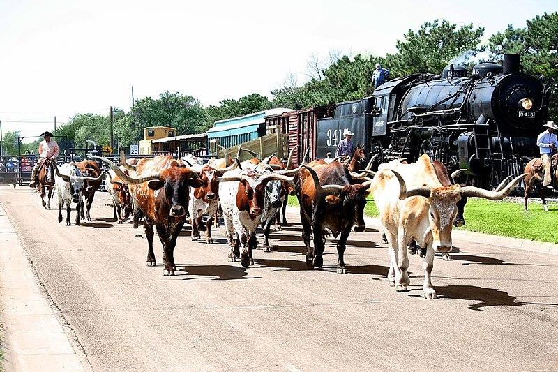 File:Abilene's Longhorn Cattle Drive.jpg