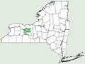 Achillea ageratum NY-dist-map.png