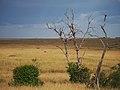 African savannah @ Masai Mara (21308330314).jpg