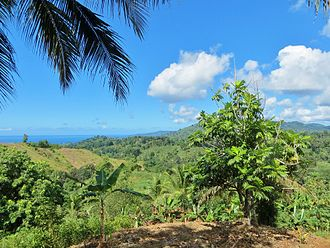Mayotte - Agricultural landscape of Mayotte, containing most of the typical crops : bananas, mangoes, coconuts, breadfruit, manioc...