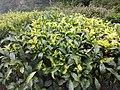 Alauva - Munnar Road Trip IMG 20170624 102248 (79).jpg