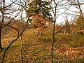 Albersweiler, Germany - panoramio (9).jpg