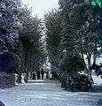 Alley, chestnut tree Fortepan 86937.jpg