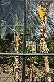 Alter Botanischer Garten - Palmenhaus 2011-08-12 15-42-48.JPG