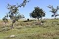 Alto Araguaia - State of Mato Grosso, Brazil - panoramio (268).jpg