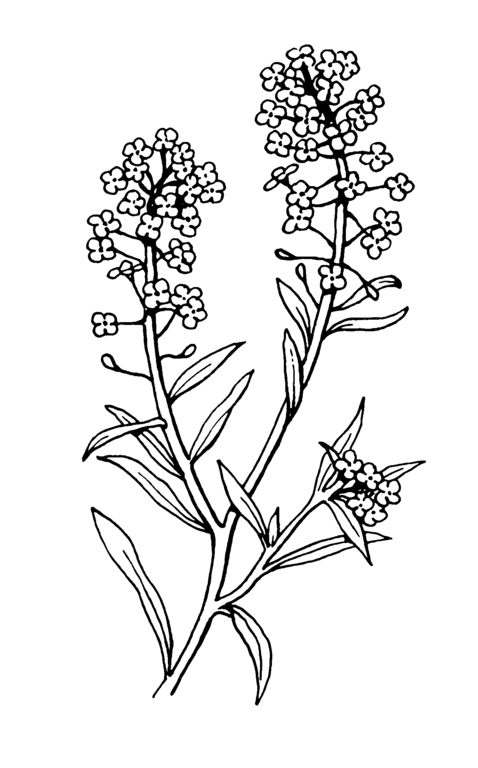 Tree Coloring Book Page