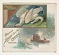 American Ptarmigan, from the Game Birds series (N40) for Allen & Ginter Cigarettes MET DP839134.jpg