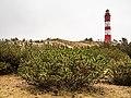 Amrumer Dünen und Leuchtturm 2.jpg