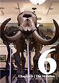 Anatomy and Physiology of Animals - 06 Skeleton.jpg