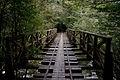Anbo Forest Railway 01.jpg