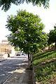 Andalusien 0064.jpg