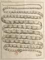 Andry - De la génération des vers (1741), planche I.png