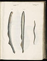 Animal drawings collected by Felix Platter, p1 - (169).jpg