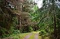 Anykščių miškai prie Vetygalos.JPG