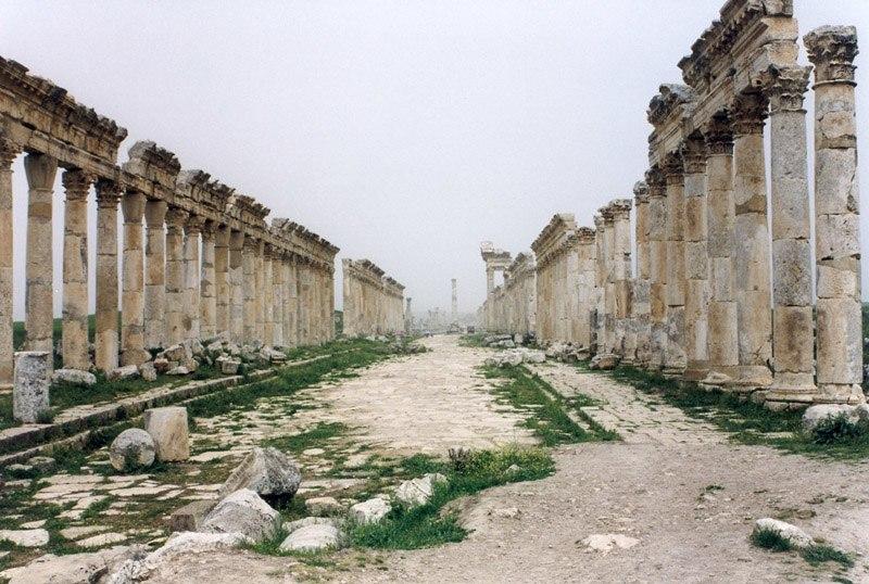 Apamea Cardo Maximus