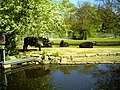 April Parc Natural Freiburg Germany - Master Landscape Rhine Valley Photography 2014 Landgut Mundenhof - panoramio (33).jpg