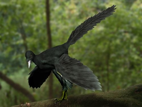 Archaeopteryx NT