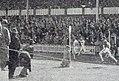 Arrivée du 200 mètres aux JO de 1920 - Allen Woodring devant son compatriote américain Charles Paddock.jpg