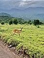Arusha-national-park-holiday-spot-mental-health.jpg