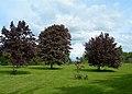 Auchincruive Arboretum - geograph.org.uk - 451471.jpg