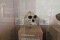 Australopithecus, scull, Anthropos Pavilon, Brno, 187933.jpg