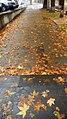 Autumn, Yerevan, ArmAg 1 (2).jpg