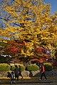 Autumn Koyasan Wakayama03s5s4272.jpg