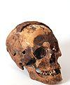 BMVB - crani - núm. 3977.JPG