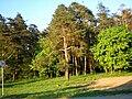 Babėnai forest, Kėdainiai - panoramio.jpg